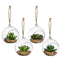 Succulents in Hanging Globes (Set of 4)