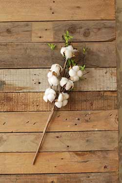 Cotton Boll Spray with Leaves