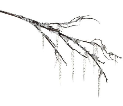 Icicle Branch
