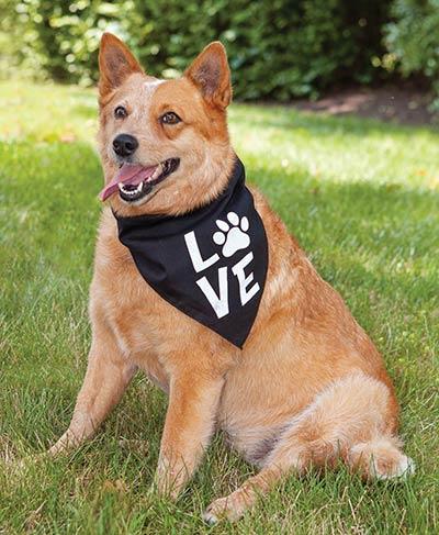 Love Dog Bandana with Paw