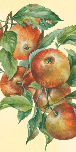 Apple Harvest Pocket Tissue