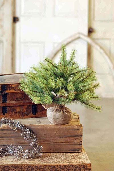 Park Pine Little Giant Tree - 15 inch