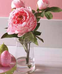 Pink Peony in Glass