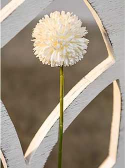 White Pom Pom Stem