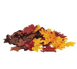 Autumn Scatter Leaves