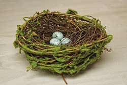 Mossy 6 inch Bird's Nest with Eggs