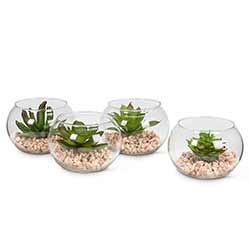 Succulents in Globes (Set of 4)