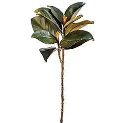 Magnolia Floral Stem