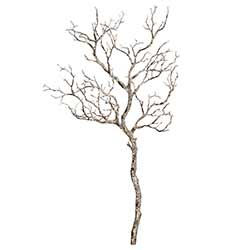 Large Winter Branch