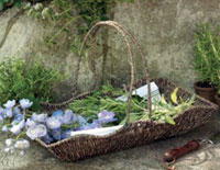 Fresh Herbs Gathering Basket