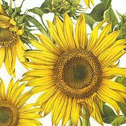 Sunflowers Luncheon Paper Napkins