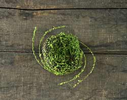Mossy Bird's Nest