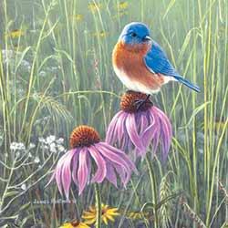 Bluebird in Prairie Coaster