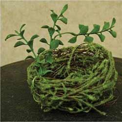 Mossy 3.5 inch Bird's Nest