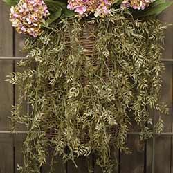 Ficus Hanging Bush (35 inch)