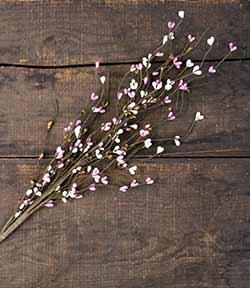 Blossom Pip Berry Spray