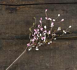 Blossom 12 inch Pip Berry Spray