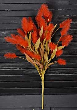 Orange Dogtail Grass Bush