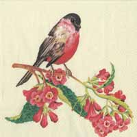Boston International Songbird Paper Luncheon Napkin