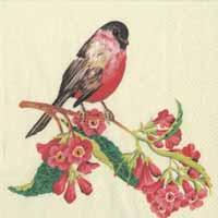Boston International Songbird Paper Luncheon Napkin