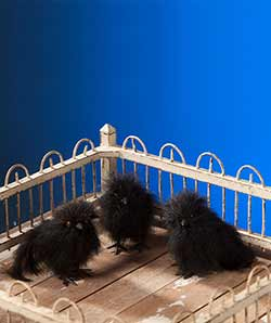 Feathered Crow Chick (Set of 3)