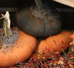 Primitive Stuffed Pumpkin - Black