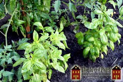 A Garden for 2011!