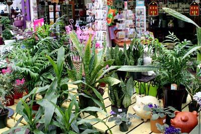 My Garden Nursery