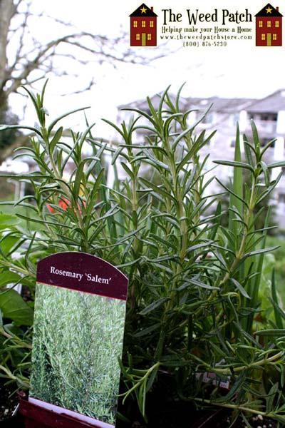 Early Garden 2011