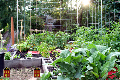 Our Garden - BEFORE it exploded in growth