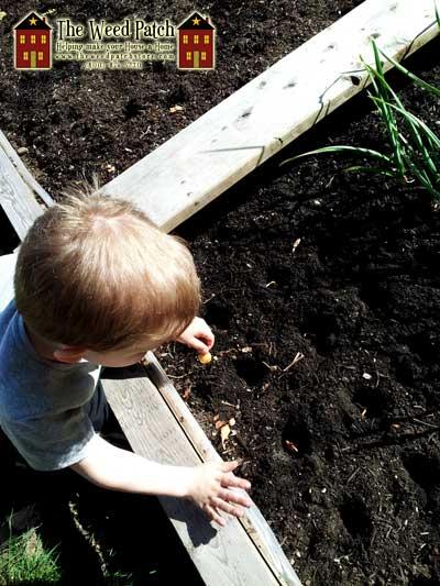 Ben planting onions