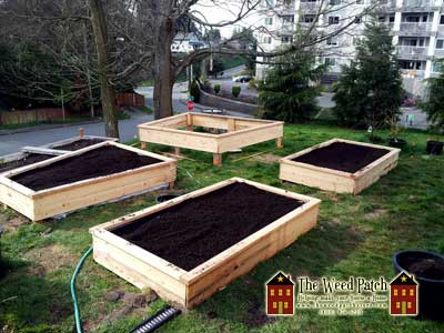 Four new raised beds