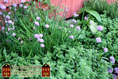 Chives and Herbs