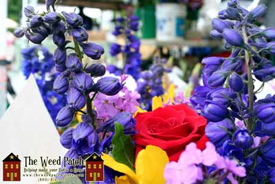 Bothell Farmers Market in Country Village Shops