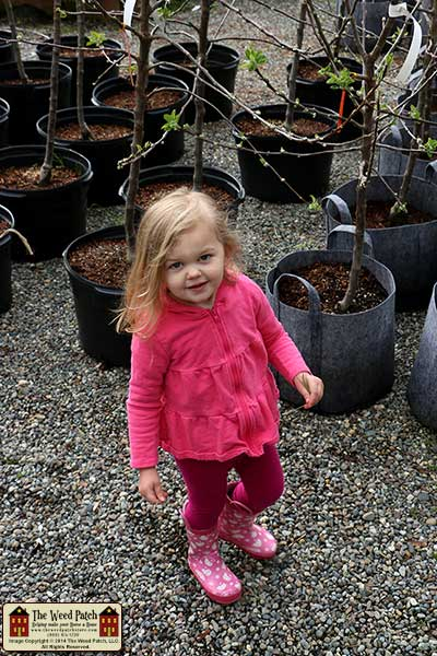 Lil Sprouts Nursery and Garden Center Washington The Weed Patch