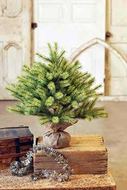 Park Pine Little Giant Tree - 26 inch