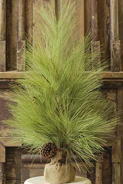 Long Needle Pine Tree - 30 inch