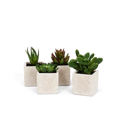 Succulents in Square Pots (Set of 4)