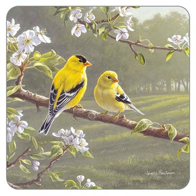 Goldfinches in the Park Coaster