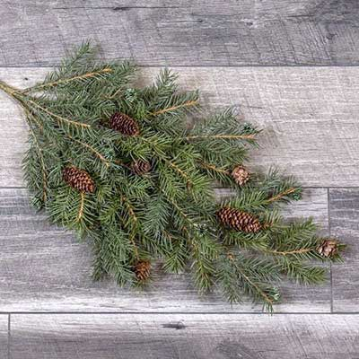 Angel Pine Spray with Cones