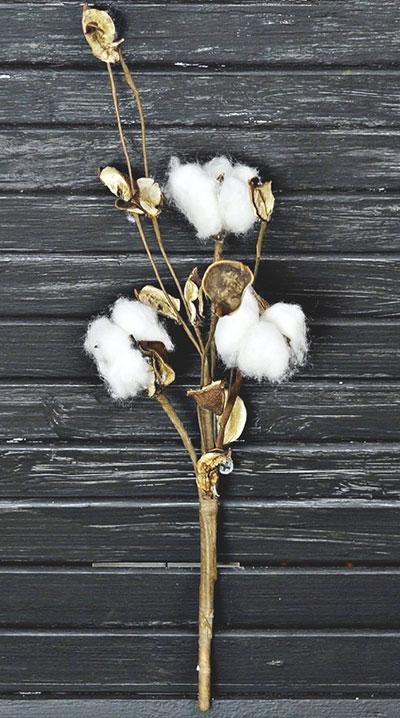 Cotton & Pod Shells Pick
