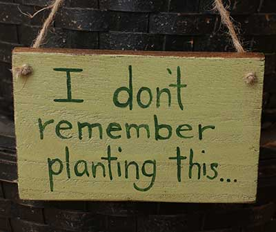 Don't Remember Planting This Wooden Sign