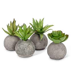 Succulents in Rocks (Set of 4)