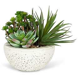 Succulent Garden in Bowl