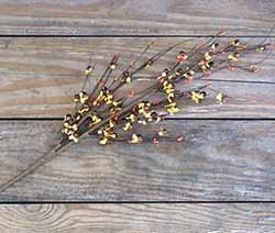 Burnt Orange Bittersweet Branch