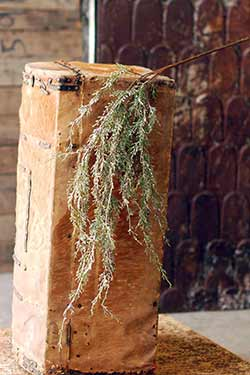 Snowy Weeping Cedar Hanging Branch