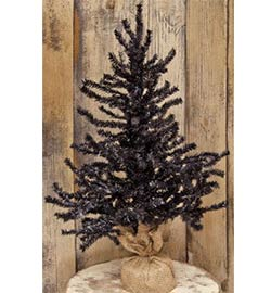 Black Pine Tree -  2 foot