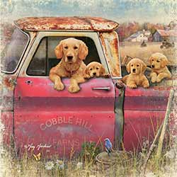 Truck and Goldens Coaster