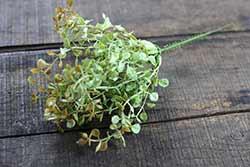 Light Green Baby's Grass Pick