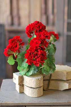Red Geranium 18 inch Floral Bush